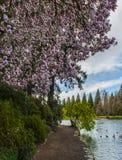 Сад рододендрона, Портленд, ИЛИ Стоковые Фотографии RF