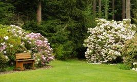 Сад рододендрона Стоковая Фотография RF
