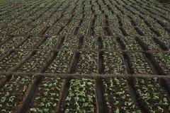 Сад салата Стоковые Фото