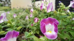 Сад свежего тропического цветка стоковые изображения rf