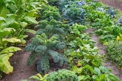 Сад сельского дома Стоковое Изображение RF