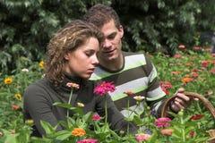 сад совместно Стоковое фото RF