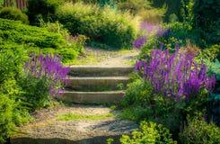 сад солнечный Стоковые Фотографии RF