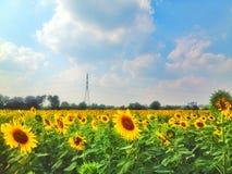 Сад солнцецвета Стоковые Изображения RF