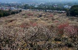 Сад сливы Xiangxuehai, Сучжоу, Цзянсу, Китай Стоковые Фотографии RF