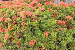 Сад с красными цветками Стоковое Изображение RF