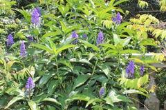 Сад с фиолетовыми цветками Стоковое Фото