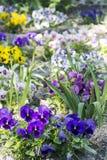 Сад с цветками Стоковые Фотографии RF