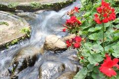 Сад Таиланд Doi Tung Стоковые Фото
