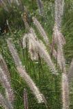 Сад травы фонтана публично декоративный Стоковые Фотографии RF