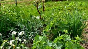 Сад травы Стоковая Фотография