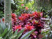 сад тропический Стоковые Изображения