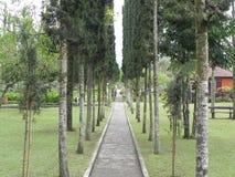 сад тропический Стоковое Фото