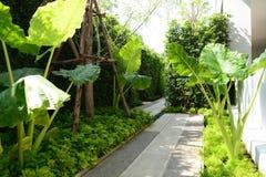 сад тропический Стоковое Изображение