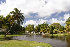сад тропический Стоковая Фотография RF