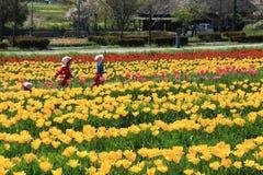 Сад тюльпана с на Oita Японией Стоковое Изображение