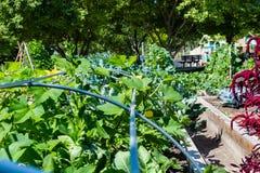 сад урбанский Стоковая Фотография RF