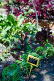 сад урбанский Стоковая Фотография