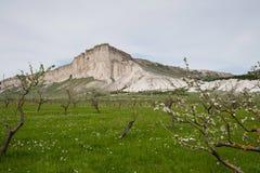 Сад цветения на Ak-Kaya стоковые изображения rf
