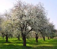 сад цветения Стоковые Изображения RF