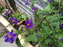 сад цветков лезвия предпосылки красивейший Стоковые Фото