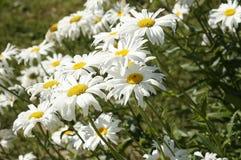 сад цветков лезвия предпосылки красивейший иллюстрация вектора