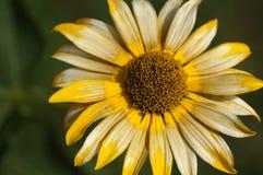 сад цветков лезвия предпосылки красивейший иллюстрация штока
