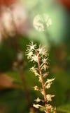 сад цветков лезвия предпосылки красивейший Стоковое Фото