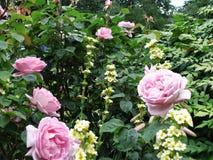 сад цветков лезвия предпосылки красивейший Стоковые Фотографии RF