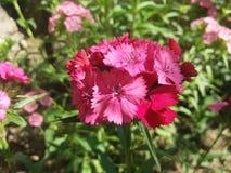 сад цветков лезвия предпосылки красивейший Стоковая Фотография RF