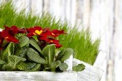 сад цветков Стоковая Фотография RF