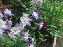 Сад цветника Стоковые Изображения