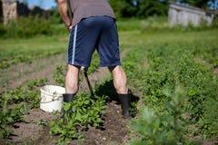 Сад человека работая с сапкой Стоковое фото RF