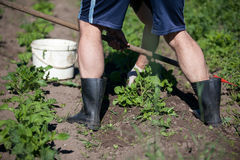 Сад человека работая с сапкой Стоковая Фотография
