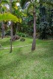 Сады Андромеды ботанические, Барбадос, карибские Стоковые Изображения