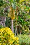 Сады Андромеды ботанические, Барбадос, карибские Стоковое фото RF
