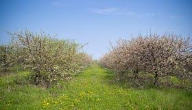 Сады весны blossoming стоковые фотографии rf