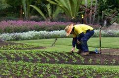 Сады города Брисбена ботанические стоковые фото