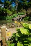 Сады Дорсет Великобритания Abbottbury тропические Стоковая Фотография RF
