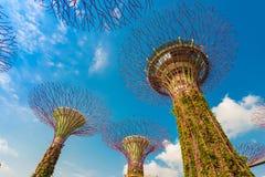 Сады заливом в Сингапур стоковое изображение rf