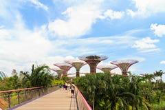 Сады заливом Сингапуром Стоковые Изображения