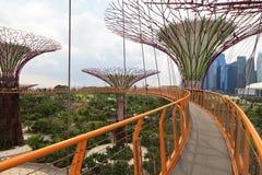 Сады заливом Сингапуром Стоковое фото RF