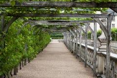 Сады и Замок de Villandry Стоковая Фотография
