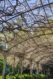 Сады Малаги ботанические Стоковая Фотография RF