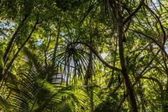 Сады пирамид из камней ботанические, зона пирамид из камней, Квинсленд, Австралия стоковая фотография rf