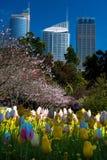 Сады Сиднея королевские ботанические Стоковая Фотография RF