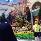 Сады Ballagio стоковое фото rf