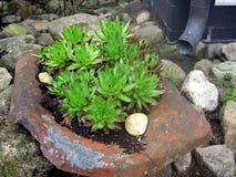 сады hamilton Новая Зеландия сада конструкции Кактусы Стоковое Изображение