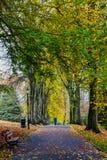 Сады Harrogate долины листьев осени Стоковые Изображения RF