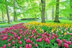 Сады Keukenhof Стоковые Изображения